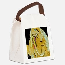 Cat flea, SEM Canvas Lunch Bag