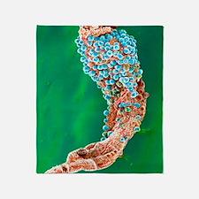 Colour SEM: malaria oocysts on stoma Throw Blanket