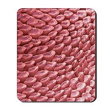 Cat tongue surface, SEM Mousepad
