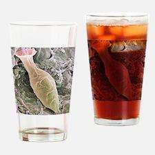 Ciliate protozoan, SEM Drinking Glass