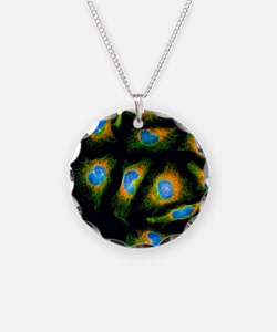 Immunofluorescent LM: mitosi Necklace
