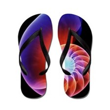 Coloured X-ray of the Nautilus shell Flip Flops