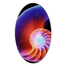 Coloured X-ray of the Nautilus shel Decal