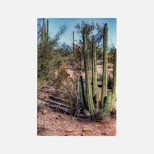 organ pipe cactus 2 Rectangle Magnet