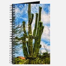 saguaro Journal