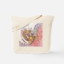 Cryptosporidium protozoa, TEM Tote Bag