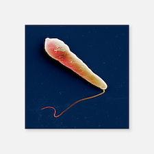 "Euglena protozoan, SEM Square Sticker 3"" x 3"""