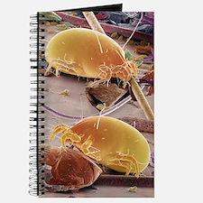 Dust mites, SEM Journal