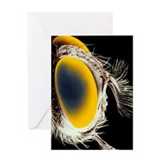 False colour SEM of the head of a ts Greeting Card