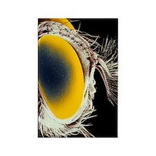 False colour SEM of the head of a Rectangle Magnet