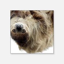 """Sloth 5x7 Rug Square Sticker 3"""" x 3"""""""