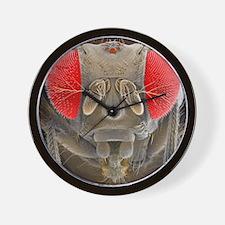 Fruit fly, SEM Wall Clock