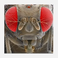 Fruit fly, SEM Tile Coaster