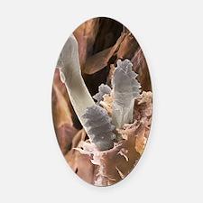 Eyelash mite, SEM Oval Car Magnet