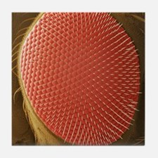 Fruit fly compound eye, SEM Tile Coaster
