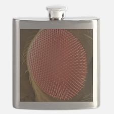 Fruit fly compound eye, SEM Flask