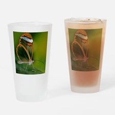 Glasswing butterfly Drinking Glass