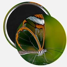 Glasswing butterfly Magnet