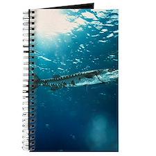 Great barracuda Journal