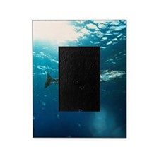Great barracuda Picture Frame