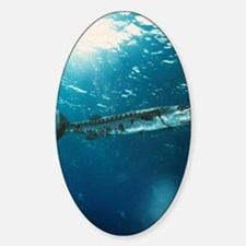 Great barracuda Sticker (Oval)