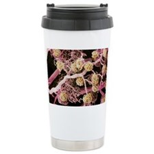 Kidney glomeruli, SEM Travel Coffee Mug