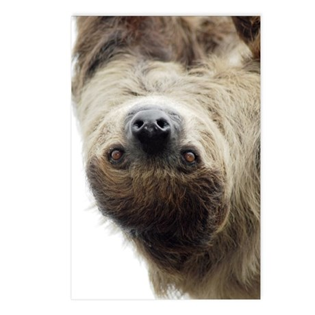 Sloth Kindle Sleeve Postcards (Package of 8)