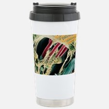 Inner ear organ of Cort Travel Mug