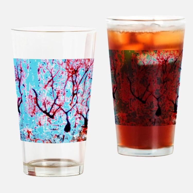 LM of cerebellar tissue with Purkin Drinking Glass