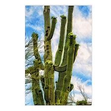 saguaro Postcards (Package of 8)