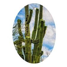 saguaro Oval Ornament