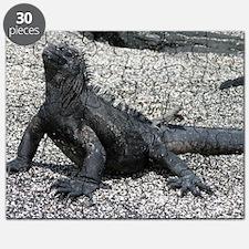 marine iguana January Puzzle