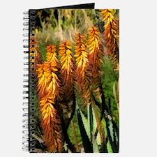 orange aloe vera Journal