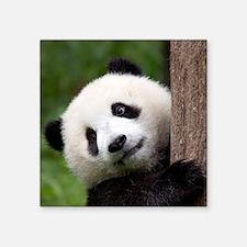 "Panda Cub Square Sticker 3"" x 3"""