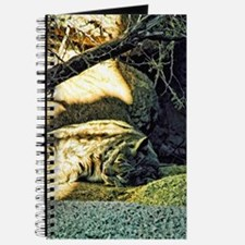 napping bobcat Journal