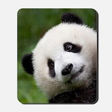 Panda Cub Mousepad