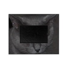Unique Cat w/ Cool Eyes Picture Frame