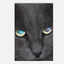 Unique Cat w/ Cool Eyes Postcards (Package of 8)