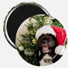Bo the Dog Magnet