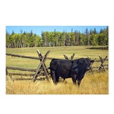 Lone Cow Postcards (Package of 8)
