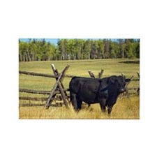 Lone Cow Rectangle Magnet