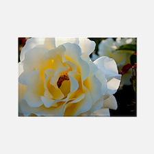 Rose Garden Rectangle Magnet