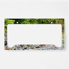 14x6_print 10 License Plate Holder