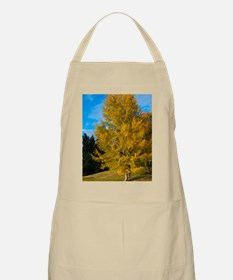 Autumn Colours in the Cariboo Apron