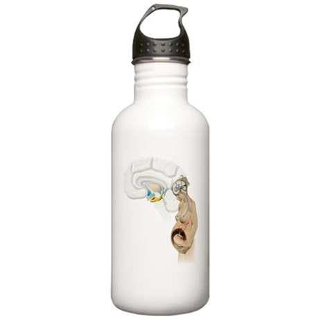 Hormones during pregna Stainless Water Bottle 1.0L