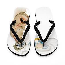 Hormones during pregnancy, artwork Flip Flops