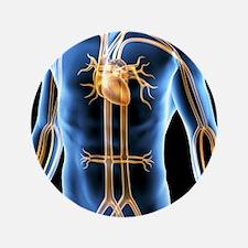 "Human cardiovascular system, artwork 3.5"" Button"