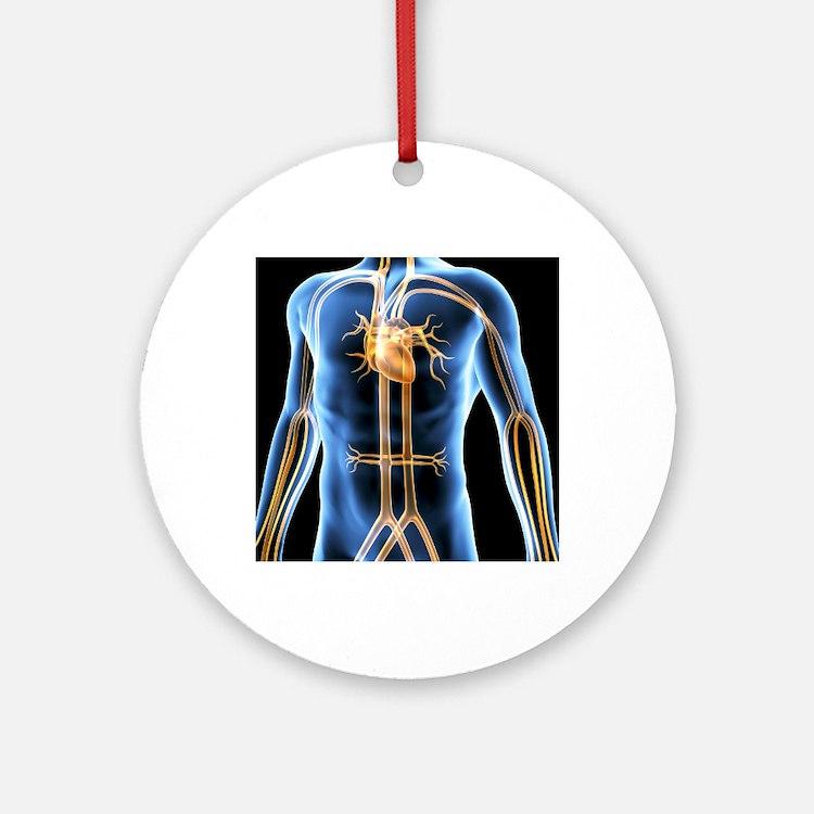 Human cardiovascular system, artwor Round Ornament