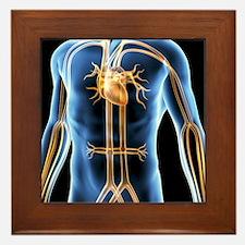Human cardiovascular system, artwork Framed Tile