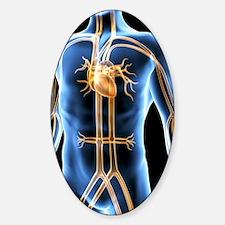 Human cardiovascular system, artwor Decal